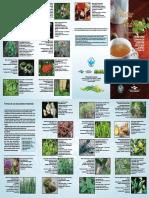 Folder Plantas Medicinais Anvisa