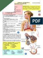 ESPAÑOL. NUTRICIÓN 2. Aparato Respiratorio-excretor. Español