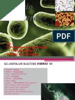 Ppt Vibrio Cholerae