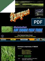 Rumput (3,4)
