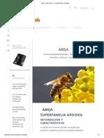 Abeja - Información y Características - Biología