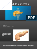 Glándula páncreas