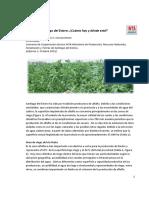 Inta Suplemento de Alfalfa en Santiago Del Estero