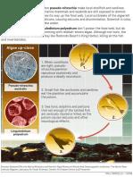 Toxic algal blooms explaining graphic