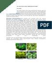 Gambar Dan Penjelasan Tumbuhan Berlumut
