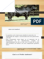FENOTIPO EN BOVINOS