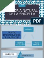Epidemiologia Shigella