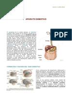 12° APARATO DIGESTIVO.pdf