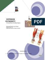 Superior Extremity