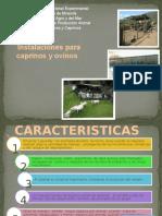 instalaciones para cabras