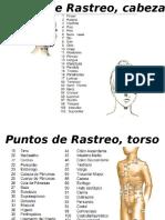 PUNTOS DE RASTREO DEL PAR BIOMAGNETICO Carlos Goya EMAGISTER 3.ppsx