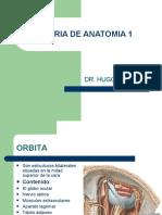 Anatomia de la Orbita