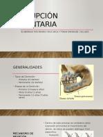 Erupcion Dentaria (Histologia)(Exposicion)