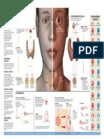 Hiper Hipo Tiroidismo