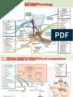 Pharmacology Mind Maps