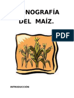 Monografia Maiz