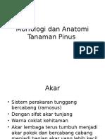 Morfologi Dan Anatomi Tanaman Pinus