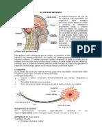 18 El Sistema Nervioso