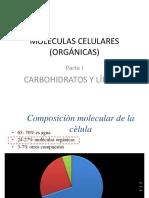 4. Carbohidratos y Lípidos