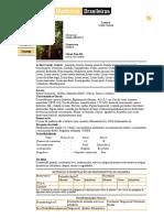 Banco de Dados de Madeiras Brasileiras_Louro