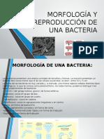 Morfología y Reproducción de Una Bacteria