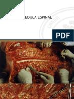Médula Espinal neuroanatomia
