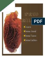 Microsoft PowerPoint - Aparato Circulatorio y Corazon