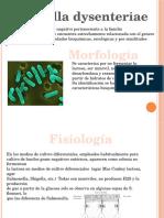 shigelladysenteriae-110522021021-phpapp02