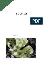 BRIOFITAS (1)