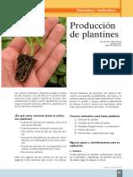 Produccion de Plantines