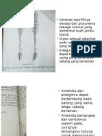 Anteredium Dan Arkegonium