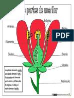 Partes de Una Flor Color