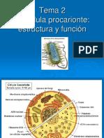 Tema4 Estructura y Función Procariota