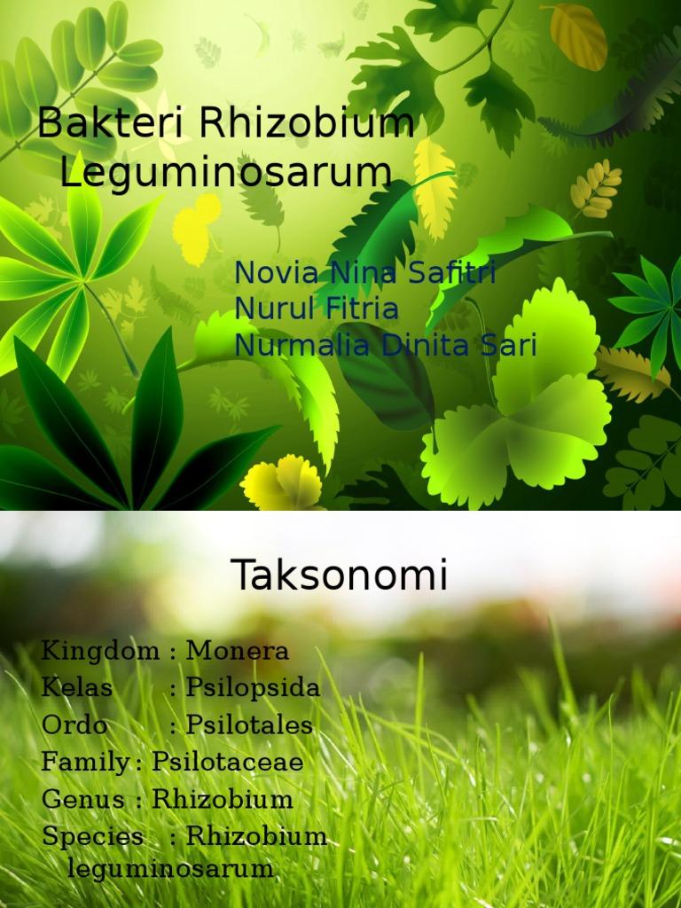 Bakteri Rhizobium Leguminosarum Pdf
