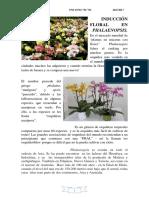Induccion Floral de Phalaenopsis