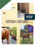 Clase 5 SISTEMA URINARIO.pdf