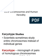 11-3 chromosomes and human heredity