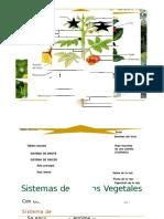 Clase 07 - Tejidos Vegetales - Copia