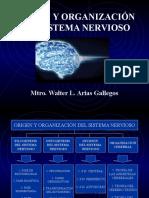 Origen y Organizacion Del SN