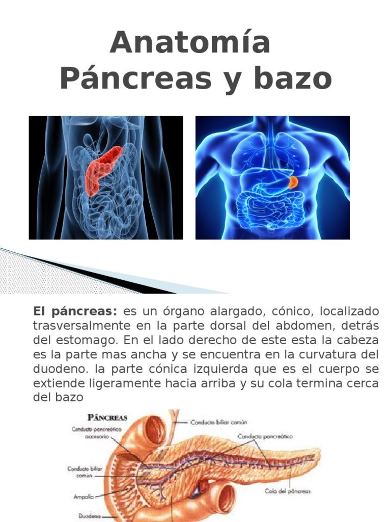 Presentacion Pancreas y Bazo Final