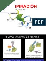 RESPIRACIÓN EN PLANTAS.pptx