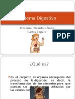 Sistema Digestvo