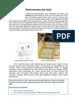 KAI2 I 2016- Pemicu Analisis Biokimia