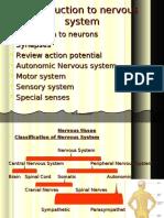 L-1 Nervous System