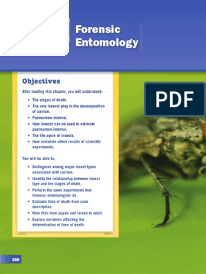 Ch 13 Forensic Entomology | Insects | Beetle