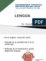 Partes de La Anatomía Lingual