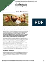 Galinhas São Mais Inteligentes Do Que Se Pensa; Aves Têm Empatia e Lógica - Notícias - Ciência