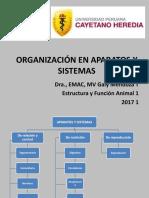 Organización en Aparatos y Sistemas Martes
