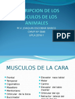 Anatomia Animal1- Clase 13