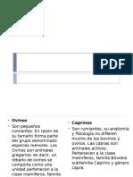 OVINO Y CAPRINO.pptx